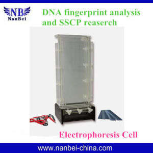 CE Confirmed Vertical Electrophoresis Apparatus with Reliable Quality pictures & photos
