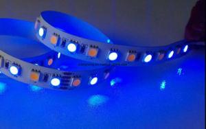 12V/24V 72LEDs/M Rgbww/Warm White LED Tape Lighting pictures & photos