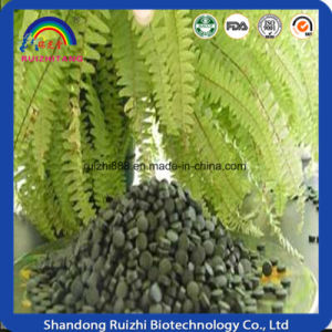 100% Pure Organic Spirulina Powder pictures & photos