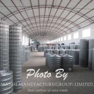 Factory Sales Welded Wire Mesh pictures & photos