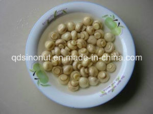 Canned Whole Mushroom Best Price (HACCP, ISO, BRC, KOSHER, HALAL) pictures & photos