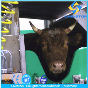 Cattle Slaughter Equipment with Onestop Process pictures & photos