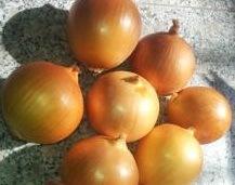 Export Healthy Food Fresh Vegetable Yellow Onion