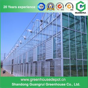 China Supplier Factory Price Single Layer PC Sheet Greenhouse pictures & photos