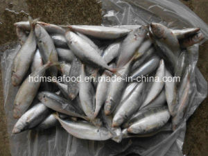 Frozen Whole Round Japanese Scad (Decapterus maruadsi) pictures & photos