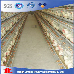 Automatic H Type Layer Chicken Cage System From China pictures & photos