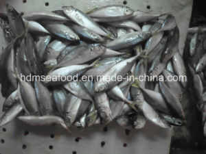Japanese Jack Mackerel pictures & photos