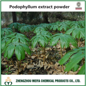 Natural Podophyllum Extract Powder with Podophylin for Medicine pictures & photos