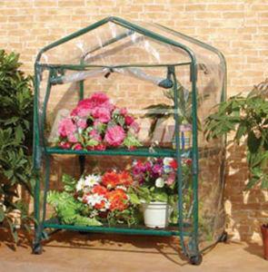 Greenhouse (G2008)