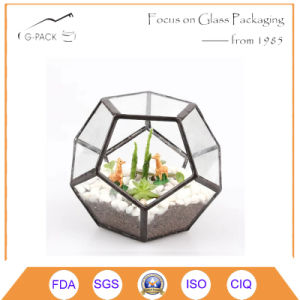 Clea Glass Terrarium Box Succulent Moss Fern Cacti Holder Case pictures & photos
