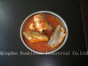 Canned Mackerel in Tomato Saurce