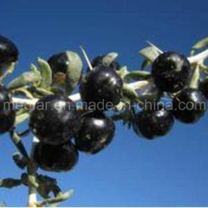 Medlar Brc ISO 9001 Kosher Black Goji Berry pictures & photos