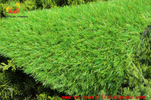 Animal Artificial Grass Carpet Natural Felling Have Good Breathability