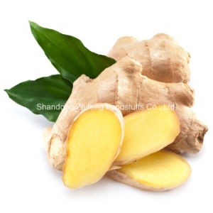 Chinese Factory Price Fresh Vegetables Ginger with Best Quality pictures & photos