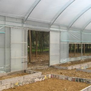 Hot Selling Single Span Film Greenhouse for Vegetable pictures & photos