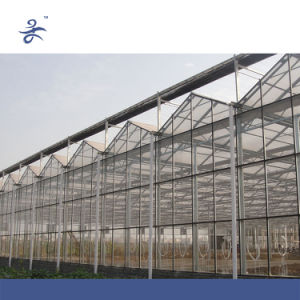 Venlo Glass Greenhouse for Hydroponic Growing System