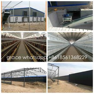 Turn-Key Poultry Layer Farm Equipment From Factory with Steel Shed Construction pictures & photos