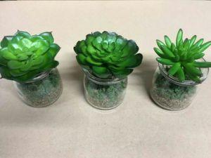 Artificial Plants and Flowers of Succulent Plants Zebra pictures & photos