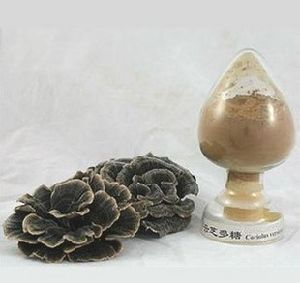 Coriolus Versicolor Extract (Turkey tai mushroom)