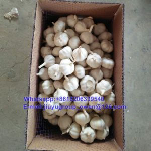 Export Grade New Crop Raw Normal/Pure White Garlic pictures & photos