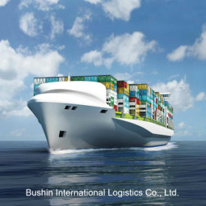Professional Ocean Shipping Logistics Service to South America