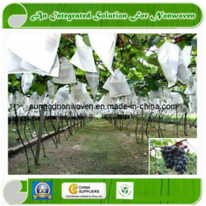 Non Woven Fabric for Fruit pictures & photos