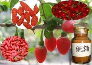 Herbal Medicine Wolfberry P. E.