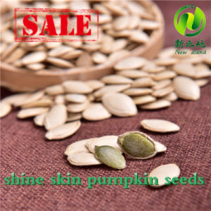 Chinese Shine Skin Pumpkin Seeds for Sale