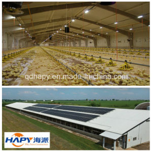 Prefab Steel Structure Chicken and Poultry House with Poultry Equipment pictures & photos