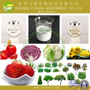 Price Preferential Herbicide Quinchlorac (95%, 97%TC, 25%SL, 50%WP, 50%WDG) pictures & photos
