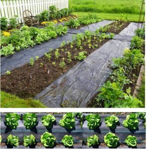 Woven Plastic Weed Mat/Garden Fabric/Agriculture Fabric pictures & photos