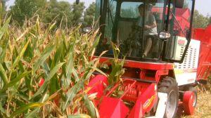 Maize/Corn Harvest Machine for Corn COB pictures & photos