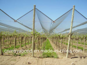 Italy Selvage Anti Hail Net / Black Anti Hail Net for Agriculture, Hail System Net. pictures & photos