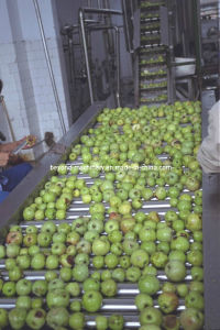 Apple Juice Processing Line pictures & photos