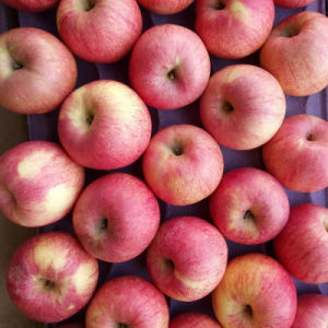 Exported Standard Quality of Fresh Red Qinguan Apple pictures & photos