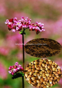 Buckwheat Seed Extract; Total Chiro-Inositol, D Chiro-Inositol, Total Flavones pictures & photos