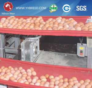Poultry Farm Layer and Broiler Chicken Cage for Chicken pictures & photos