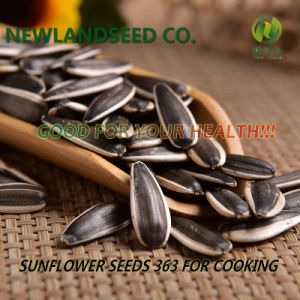 Black Sunflower Seeds with Biggest Size