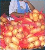 Good Quality Holland Potato pictures & photos