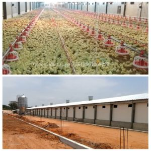 Modern Automatic Poultry Farm with Design and Matching Prefab Shed pictures & photos