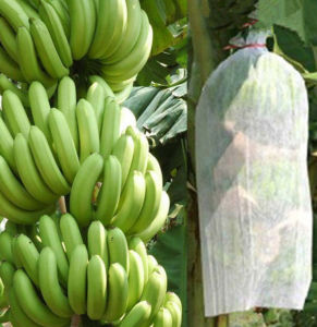 Tecido Nao-Tecido 100% Polipropileno Banana Bag pictures & photos
