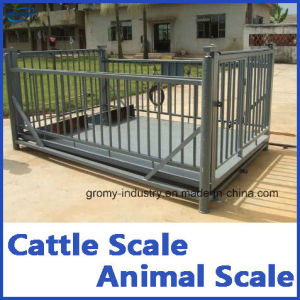 Electronic Cattle Weighing Scale Animal Scale Livestock Floor Scale pictures & photos