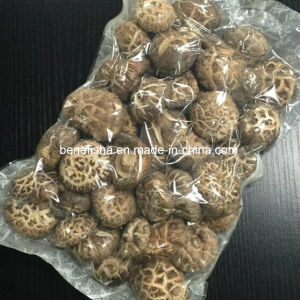 Dried Mushroom (White Flower) pictures & photos
