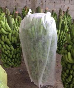 PP Non Woven Fabric Banana Bunch Cover pictures & photos