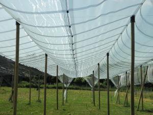 Hail Protection Net 100% Virgin HDPE Anti Hail Net pictures & photos