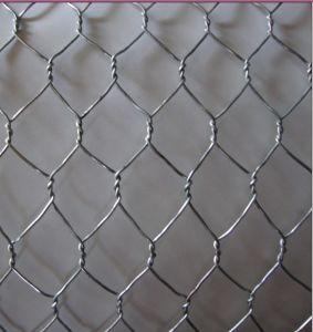 Galvanized Hexagonal Wire Mesh / Plastic Coated Hexagonal Wire Mesh / Chicken Wire Mesh From Yaqi pictures & photos
