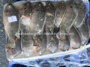Chinese Black Tilapia Price pictures & photos