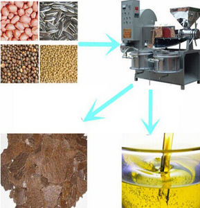 Automatic Sunflower Seed Oil Extraction Machine pictures & photos