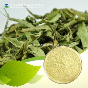 Natural Stevia Extract 90% 95% Stevioside pictures & photos