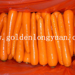 Fresh Carrot Directly From Farmers pictures & photos